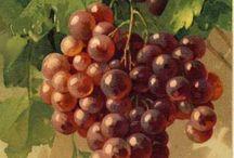 фрукты живопись