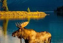 Alberta animals