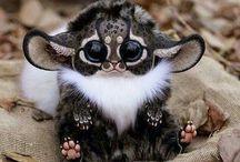 Too Cute To Handle