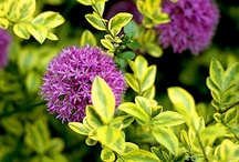 1) Variegated plants