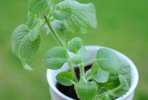 pěstování kytek a bylin