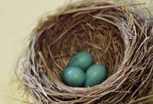 Гнездо / Nest