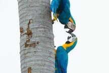 Fulge- birds