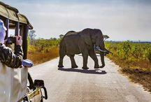 Africa, Safari, Afrikai szafarik, Afrika szafari / Africa, Safari, Afrikai szafarik, Afrika szafari képes gyűjtemény. Állatok, tájak, emberek...