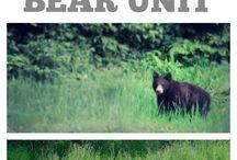 misie i niedźwiadki