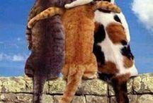 CAT,CAT,CAT!