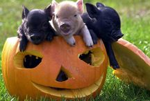 I <3 pigs!!! / by Casey Wilson