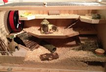 Hamster / All about hamsters. Cages, food, play, etc.