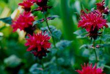 Melkhout garden