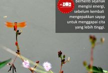 katadefoto / Simple quotes by defoto