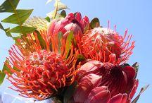 African bush bouquet