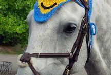 dla konia