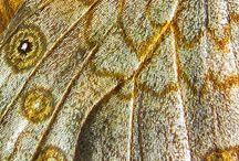 Close Ups / by Kristin Barrus