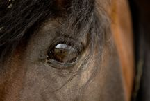 Horses / The elegance of a horse