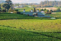 Northern California Wineries