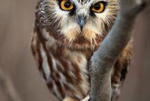 owl you need is an owl