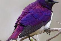 Birds / by Karen Elshoff