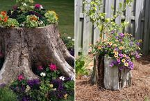 Gardening and yard ideas