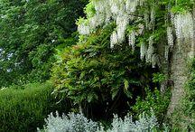 Garden design/parkland trees