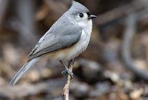 Back yard feeder birds / by Jimmy Lawrence