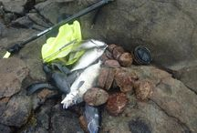 Hunting and diving for food in the South Island, New Zealand / Hunting and diving for food