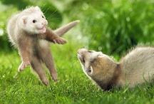 Cute  Animals / by Lori Breazeal