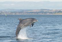 Dynamic Animal / dynamic aerodynamic hidrodynamic biodynamic  present in the structures and forms of animals