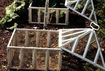 Victorian cloches / Campane di vetro per proteggere le piante dal freddo e dal vento.