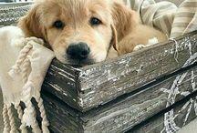 R u a boy or a girl? I am a puppy lol