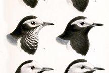 specie di uccelli L.I.P.U.