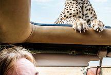 I want to go to Africa / Det vil jeg gerne opleve :)