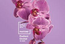 Orquídea Radiante: a cor do ano / Eleita pela Pantone como a cor de 2014, a Orquídea Radiante (Radiant Orchid) é uma mistura envolvente de tons de roxo, fúcsia e rosa que faz um convite à inovação e à criatividade.