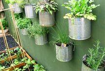 gardening / by Tammy Tucker Cessna