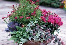 kertészkedés / növények