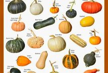 Pumpkins and gourds / by Barbara Long