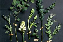 Травы и растения(>ω^)