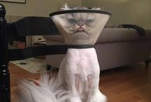 Funny Animals / Funny crazy animal pictures with captions
