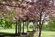 Harrogate Stray / 200 acres of open parkland that sweeps majestically around the spa town of Harrogate