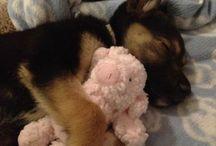 Cute animals & babies / animals