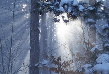 Winter inspiration / The beauty of Winter