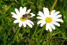 Bylinky a kvetinky / zdravé bylinky http://k-vital.sk/bylinky-a-zdravie/
