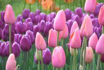 flowery fun / by Vivian Hale