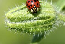 #Lady Bugs