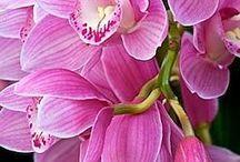 KVĚTY Orchidej