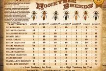 bee breeding