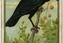 crows and birds
