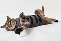Thundershirt for Cats / by ThunderShirt
