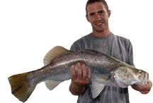 Full Day Fishing Charters Cairns