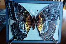 Butterfly Cards / by Elizabeth Schwerm