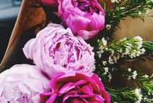 Flores /u\